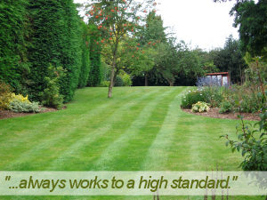 regular garden miantenance in sale to keep your garden looking great all year round